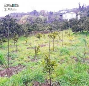 Земельный участок с садом